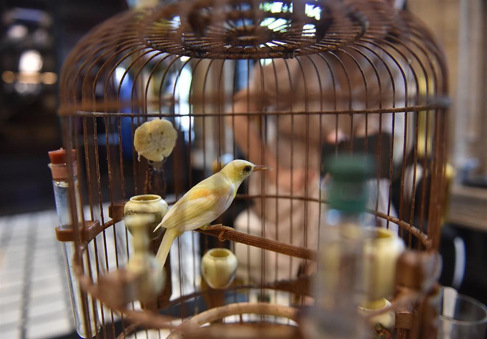 Bộ sưu tập chim giá tiền tỷ của vua chim màu Việt: Đắt đỏ, quý hiếm, đẳng cấp nhất Việt Nam - Ảnh 5.