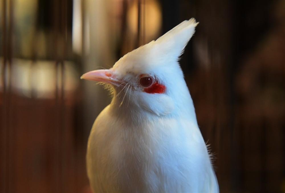 Bộ sưu tập chim giá tiền tỷ của vua chim màu Việt: Đắt đỏ, quý hiếm, đẳng cấp nhất Việt Nam - Ảnh 6.