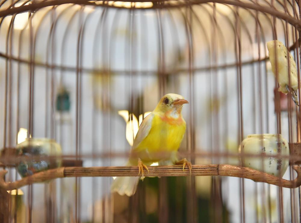 Bộ sưu tập chim giá tiền tỷ của vua chim màu Việt: Đắt đỏ, quý hiếm, đẳng cấp nhất Việt Nam - Ảnh 8.