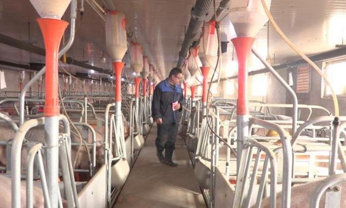 Trung Quốc phát hiện loại cúm lợn mới có thể gây đại dịch - Ảnh 1.