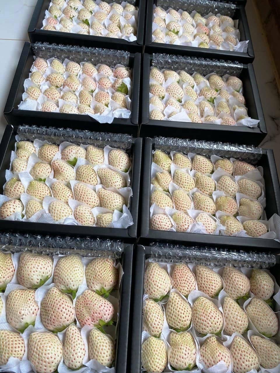 Sức hút kỳ lạ của dâu tây Bạch Tuyết giá gần 2 triệu đồng/kg - Ảnh 6.