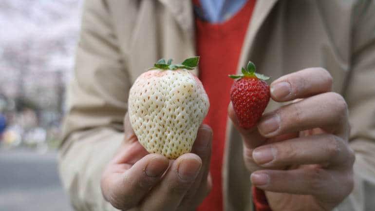 Sức hút kỳ lạ của dâu tây Bạch Tuyết giá gần 2 triệu đồng/kg - Ảnh 8.
