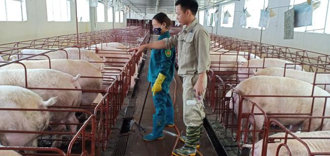 """Bài 4: Dùng """"trăm phương ngàn kế"""", nhiều trại lợn  hồi sinh  - Ảnh 2."""