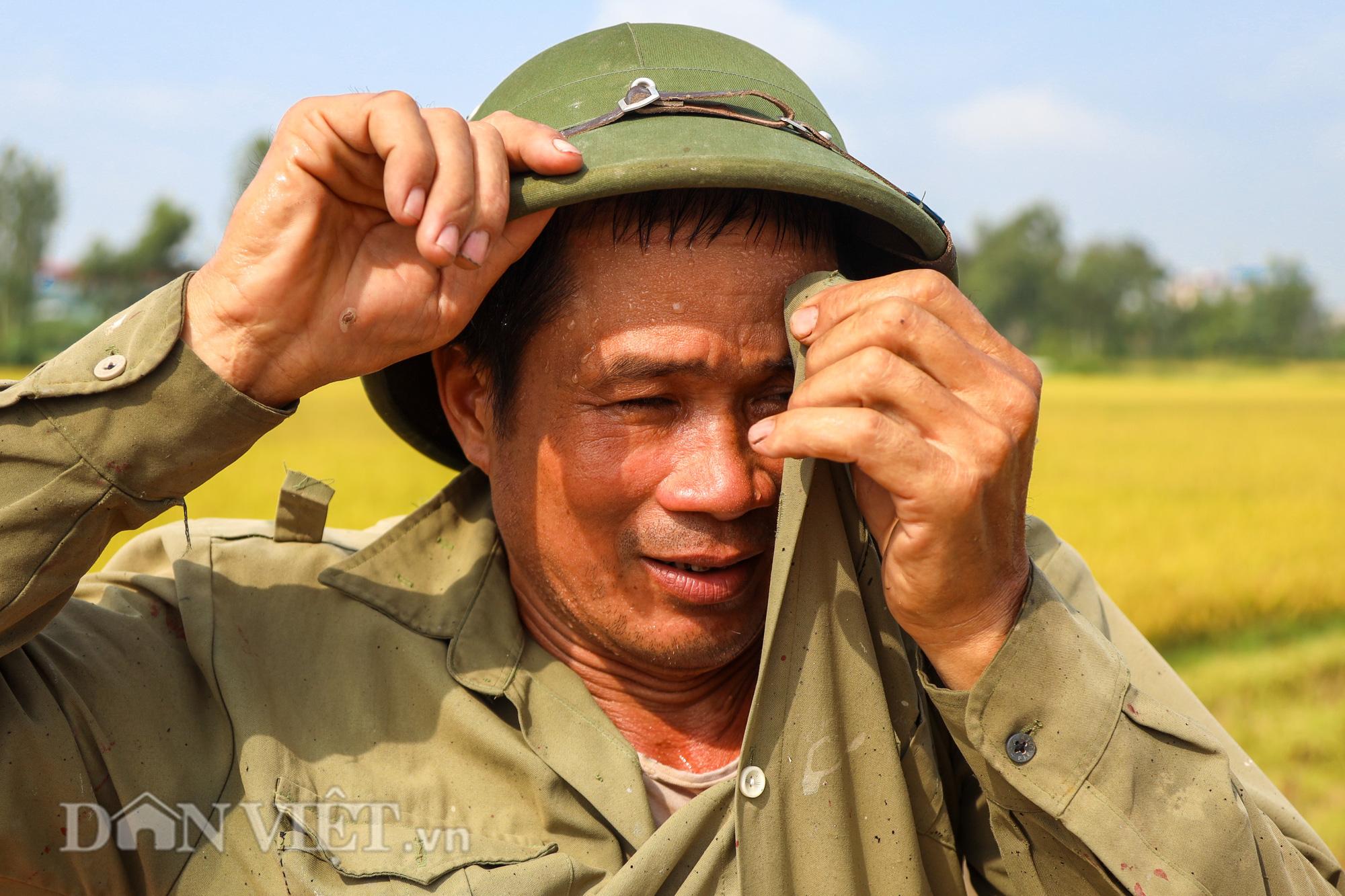 Nông dân Hà Nội đội nắng đón vụ mùa bội thu - Ảnh 9.