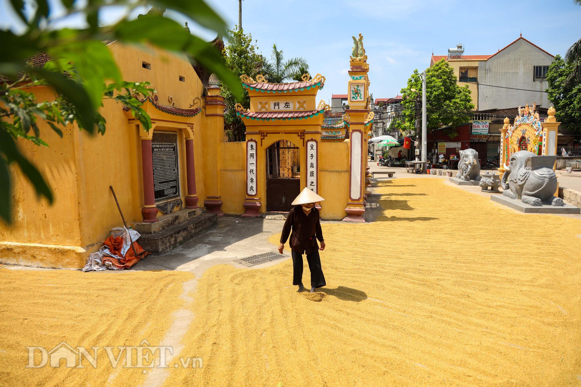 Nông dân Hà Nội đội nắng đón vụ mùa bội thu - Ảnh 12.