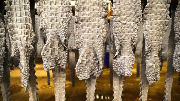 """Bí ẩn bên trong trang trại cá sấu siêu """"khủng"""" nhất Thái Lan - Ảnh 8."""