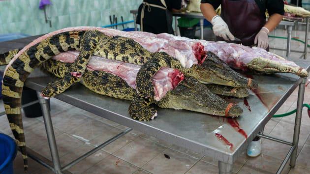 """Bí ẩn bên trong trang trại cá sấu siêu """"khủng"""" nhất Thái Lan - Ảnh 6."""