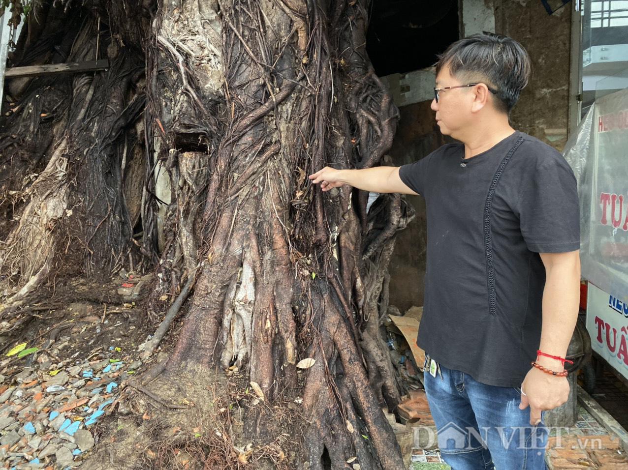 Đồng Tháp: Dời nhà dân để nhường sự sống cho cây da hơn 100 tuổi  - Ảnh 5.