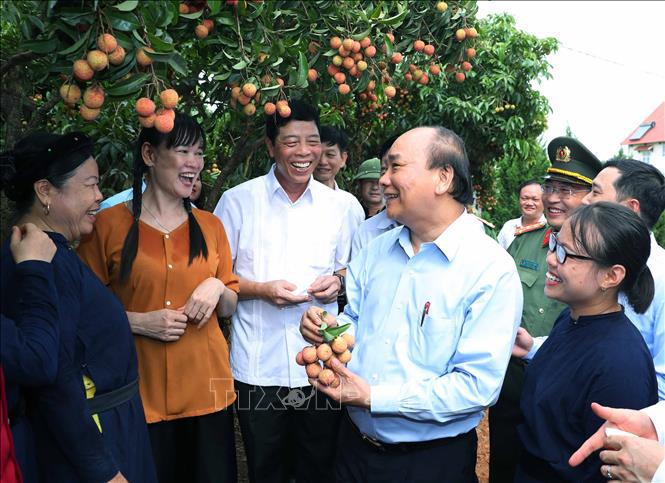Vải thiều vào vụ, Thủ tướng lên Bắc Giang động viên đoàn xe xuất hành tiêu thụ vải - Ảnh 1.