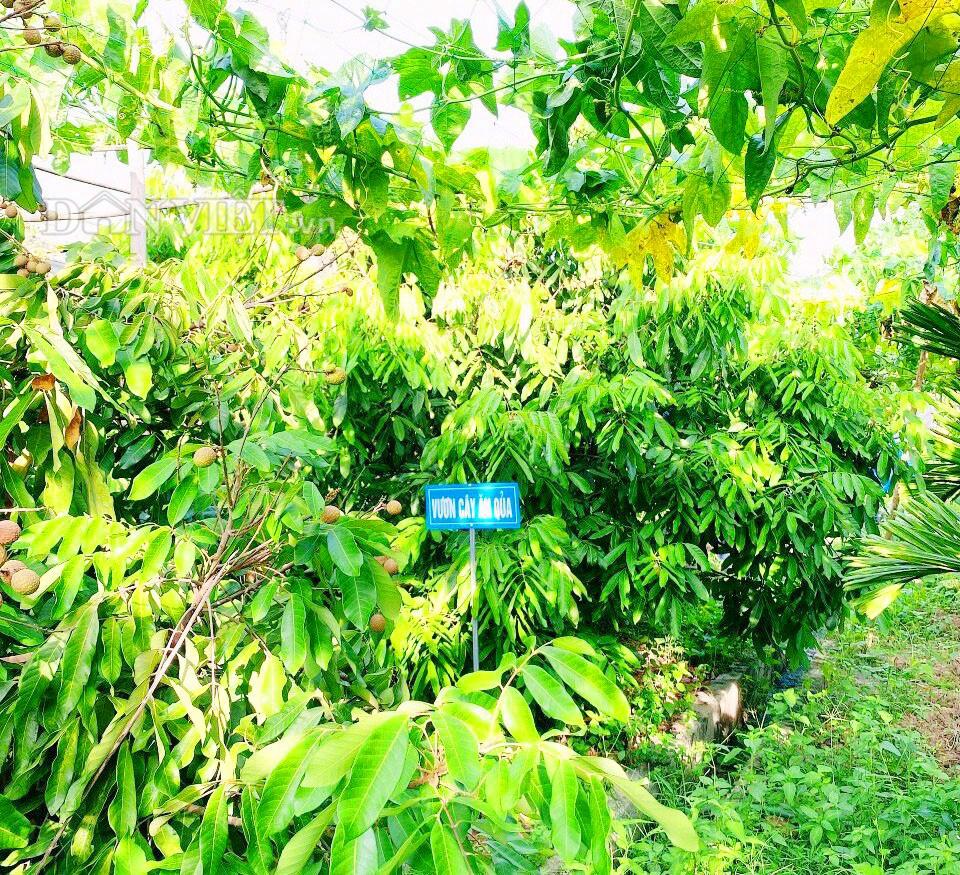 Hà Tĩnh: Thăm khu vườn mẫu 3000m2 đầy hoa thơm trái ngọt - Ảnh 4.