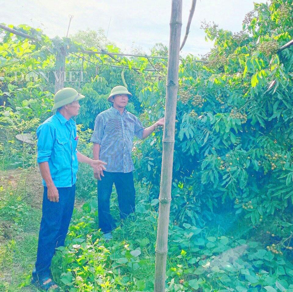 Hà Tĩnh: Thăm khu vườn mẫu 3000m2 đầy hoa thơm trái ngọt - Ảnh 2.
