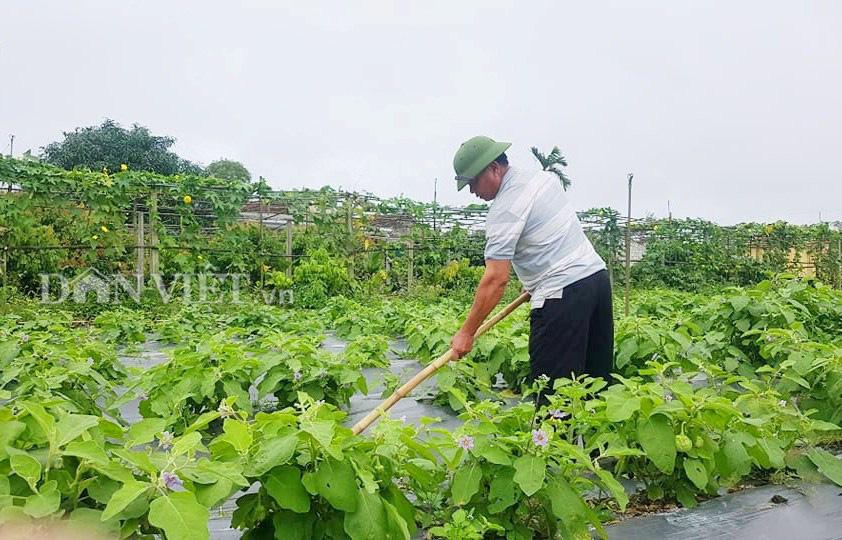Hà Tĩnh: Thăm khu vườn mẫu 3000m2 đầy hoa thơm trái ngọt - Ảnh 3.