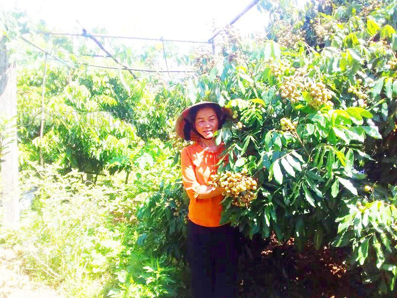 Hà Tĩnh: Thăm khu vườn mẫu 3000m2 đầy hoa thơm trái ngọt - Ảnh 1.