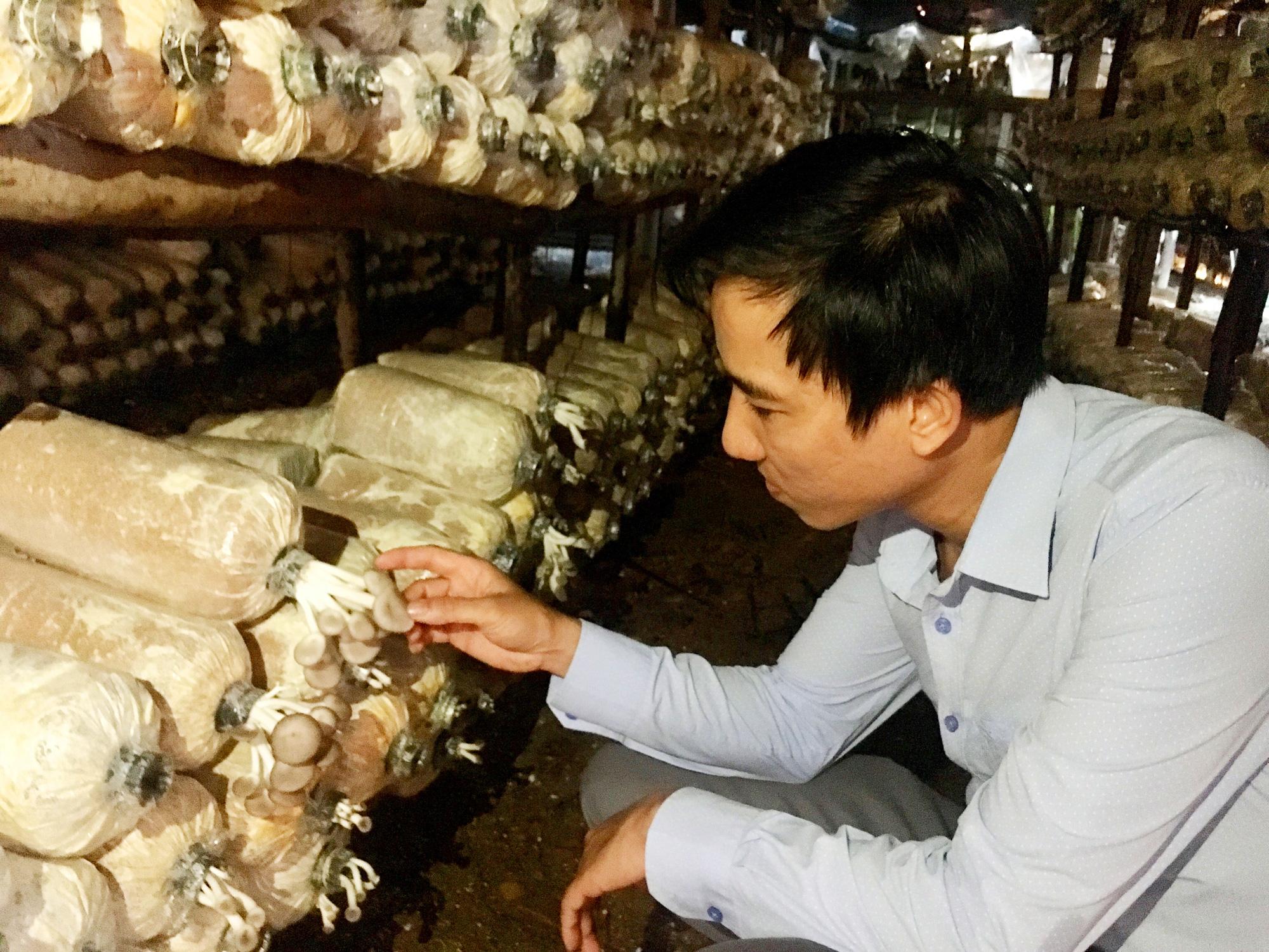 Quảng Bình: Bỏ công việc nhà nước, vợ chồng về quê trồng nấm lãi cả trăm triệu/năm  - Ảnh 1.