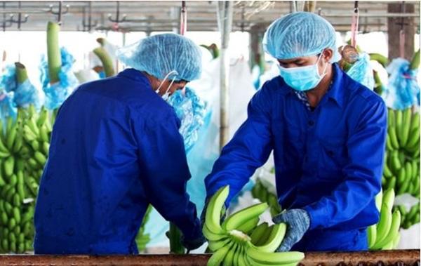 Dự án nông nghiệp của Chủ tịch Nguyễn Đức Tài của Thế giới Di động có gì đặc biệt? - Ảnh 3.