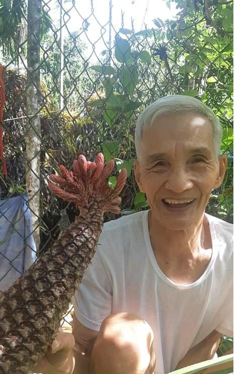 Quảng Nam: Tuổi 83, lần đầu thấy trái dứa có hình thù con gà trống - Ảnh 4.
