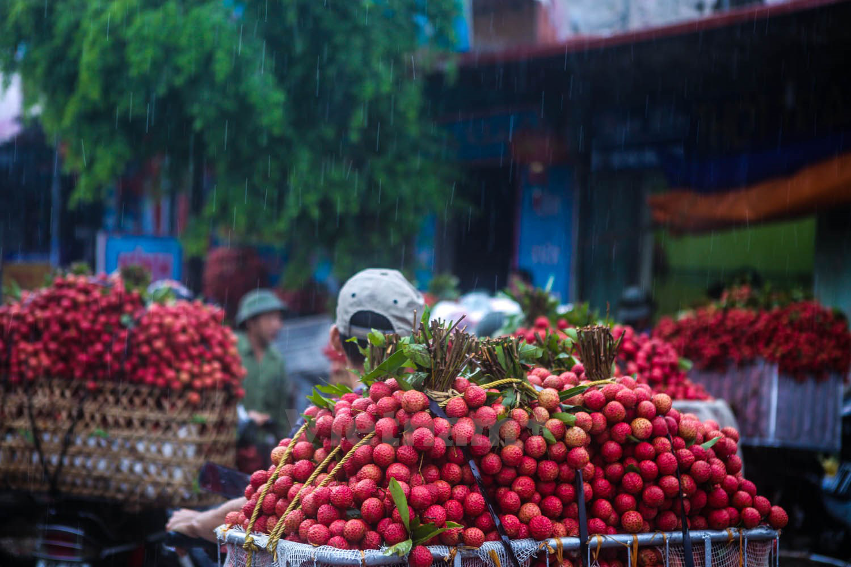 """Vải thiều Bắc Giang tiếp tục ngồi """"chễm trệ"""" trong các siêu thị lớn của Thái Lan - Ảnh 2."""