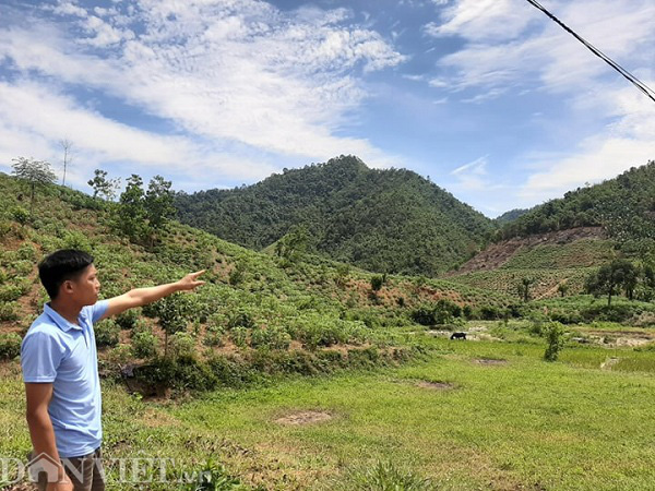"""Phú Thọ: """"Tàn sát"""" rừng phòng hộ và hơn 1 nghìn hecta rừng bị """"biến mất""""  - Ảnh 1."""