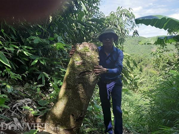 """Phú Thọ: Đi tìm nguyên nhân hơn 1.000ha rừng tự nhiên bị... """"biến mất"""" - Ảnh 2."""