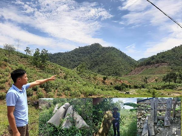 """Phú Thọ: """"Tàn sát"""" rừng phòng hộ và hơn 1 nghìn hecta rừng bị """"biến mất""""  - Ảnh 5."""
