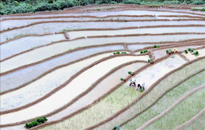 Ruộng bậc thang - bức tranh nghệ thuật nơi vùng núi Sơn La - Ảnh 8.