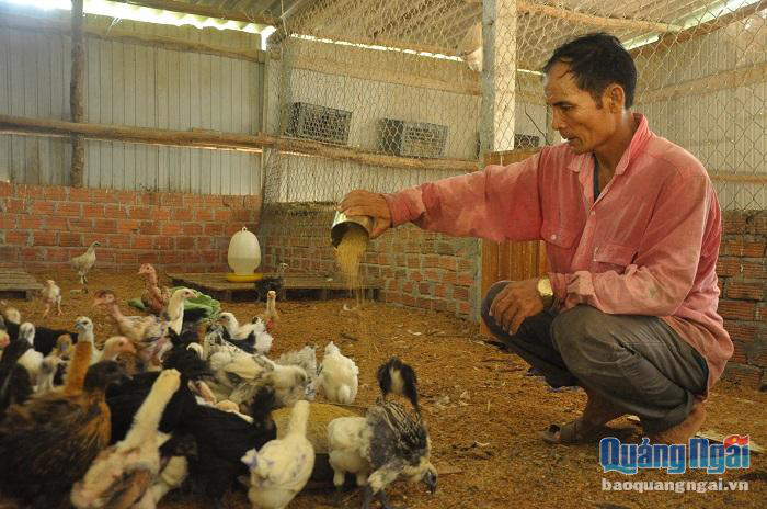 Nông dân 4.0 thành công với giống gà quý - Ảnh 3.