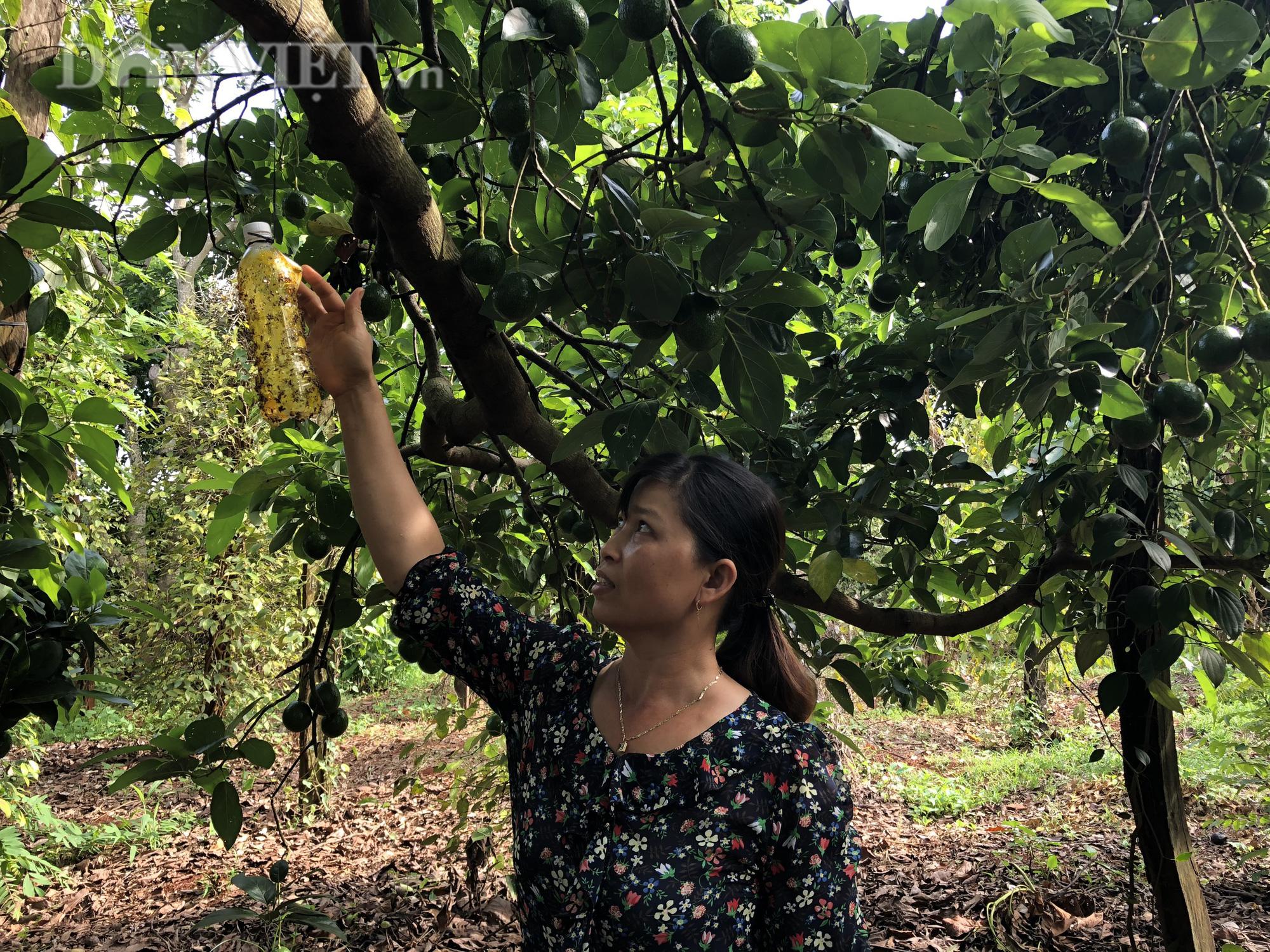 Người phụ nữ đào bỏ tiêu, bơ hiến hơn 1.500m2 đất làm đường - Ảnh 5.
