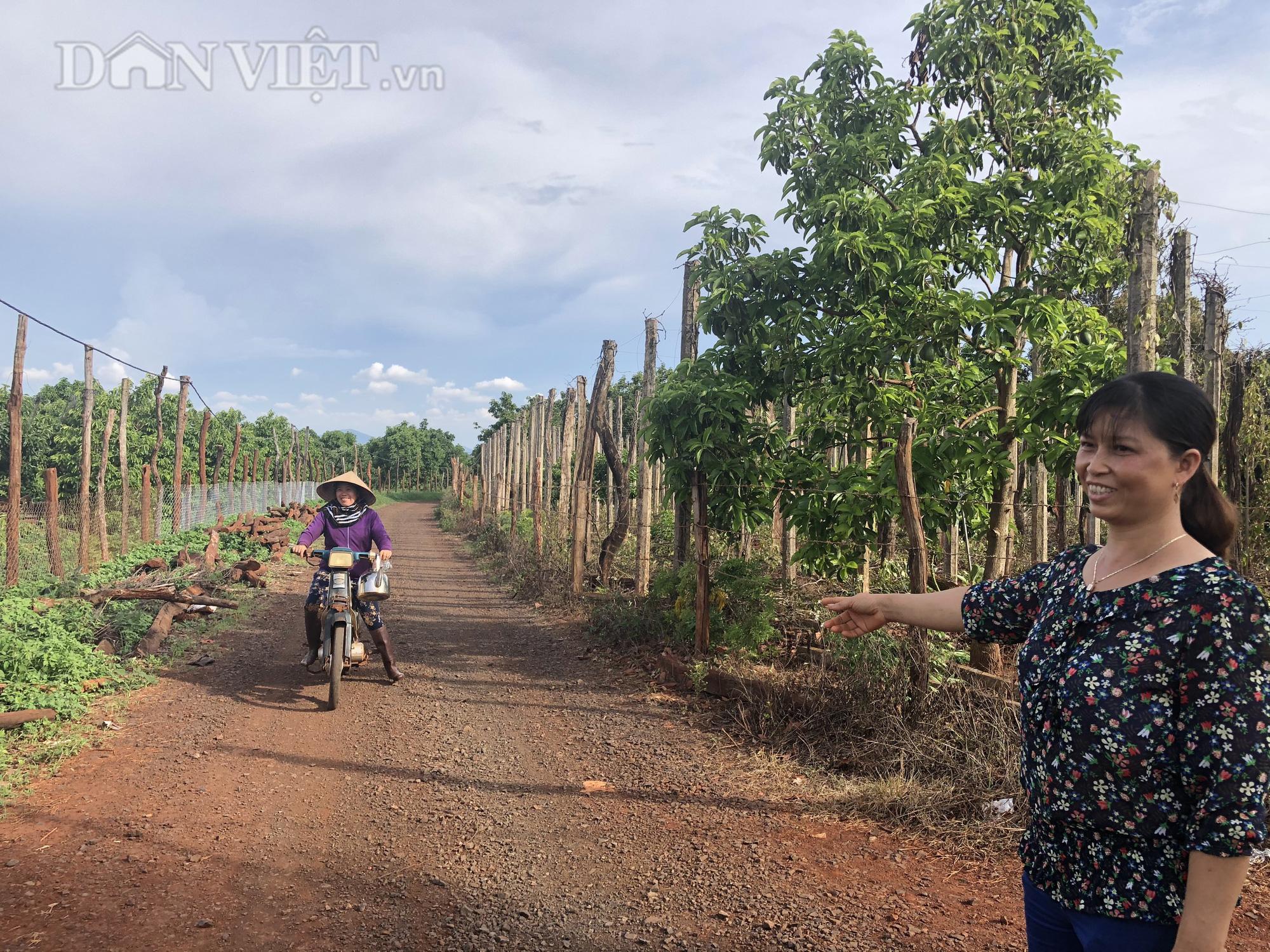 Người phụ nữ đào bỏ tiêu, bơ hiến hơn 1.500m2 đất làm đường - Ảnh 1.