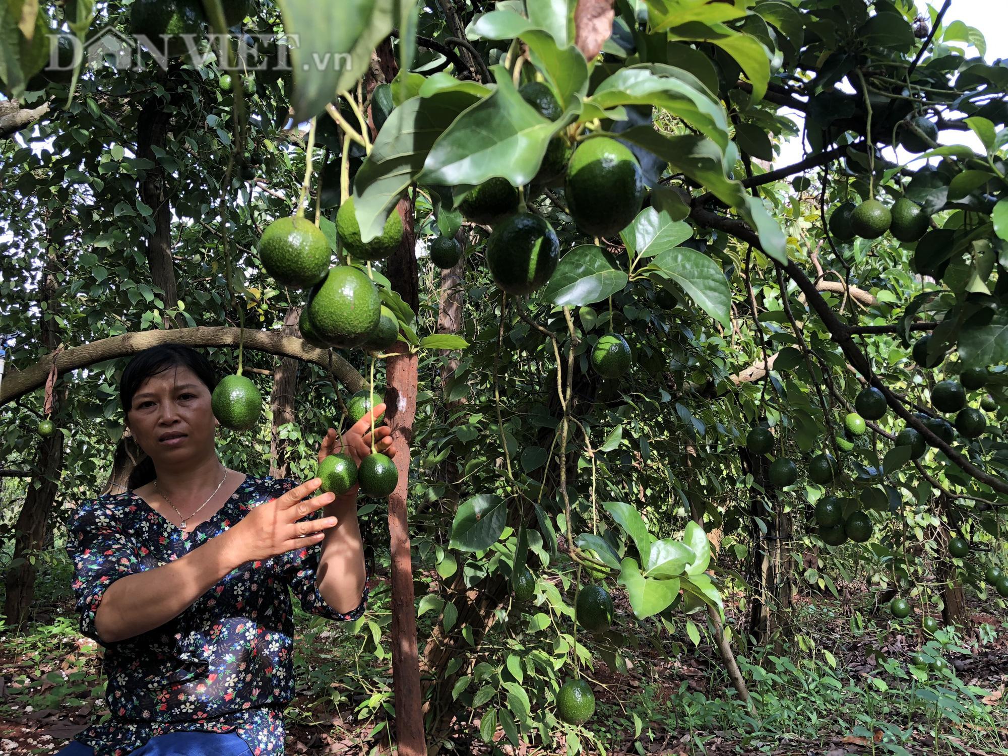 Người phụ nữ đào bỏ tiêu, bơ hiến hơn 1.500m2 đất làm đường - Ảnh 4.