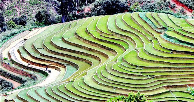 Ruộng bậc thang - bức tranh nghệ thuật nơi vùng núi Sơn La - Ảnh 1.