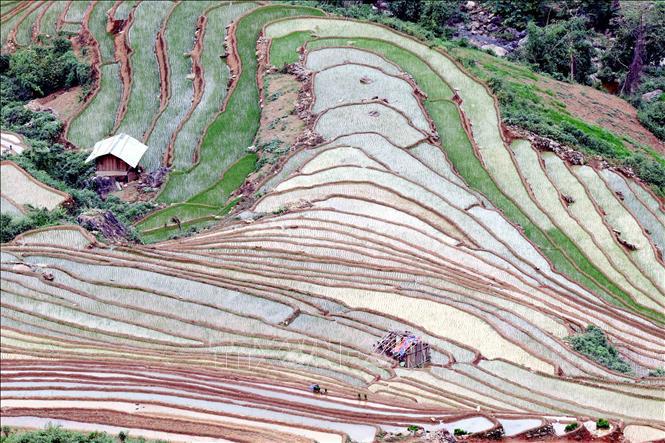 Ruộng bậc thang - bức tranh nghệ thuật nơi vùng núi Sơn La - Ảnh 6.