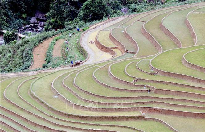 Ruộng bậc thang - bức tranh nghệ thuật nơi vùng núi Sơn La - Ảnh 4.