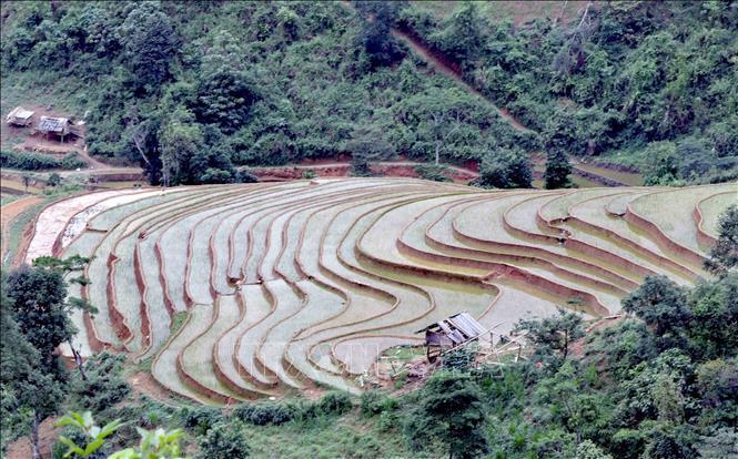 Ruộng bậc thang - bức tranh nghệ thuật nơi vùng núi Sơn La - Ảnh 3.