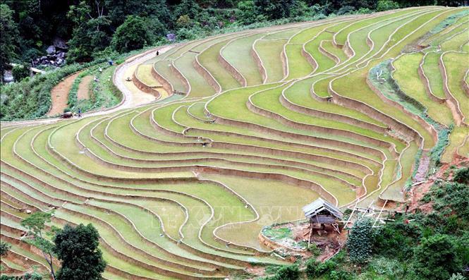 Ruộng bậc thang - bức tranh nghệ thuật nơi vùng núi Sơn La - Ảnh 2.