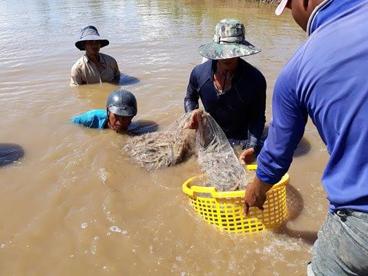 Độc đáo: Nông dân nuôi tôm thẻ chân trắng trong… nước ngọt - Ảnh 3.