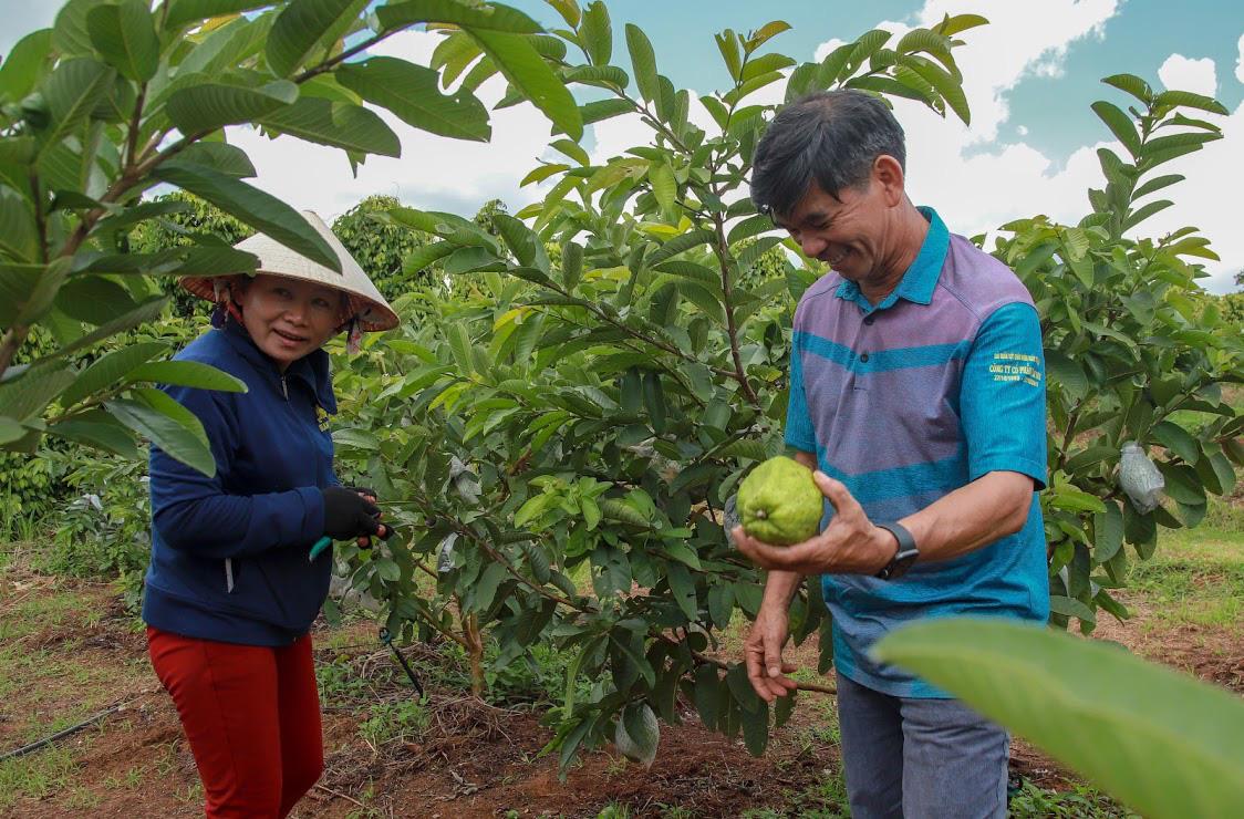 Ông Huỳnh Mau - cánh tay phải của bầu Đức một thời giờ đã an thú điền viên cùng vợ với niềm vui cung cấp nông sản sạch. Ảnh: Nguyễn Chương