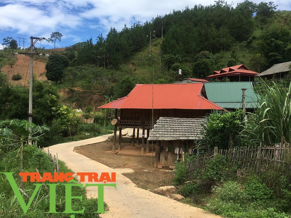 Hội Nông dân Sơn La hiến đất, góp sức xây dựng nông thôn mới - Ảnh 3.