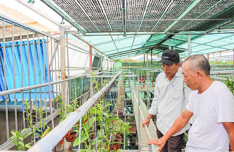 Tranh thủ lúc nhiều người đang săn lùng, một nông dân Quảng Trị làm giàu nhờ trồng lan rừng - Ảnh 1.