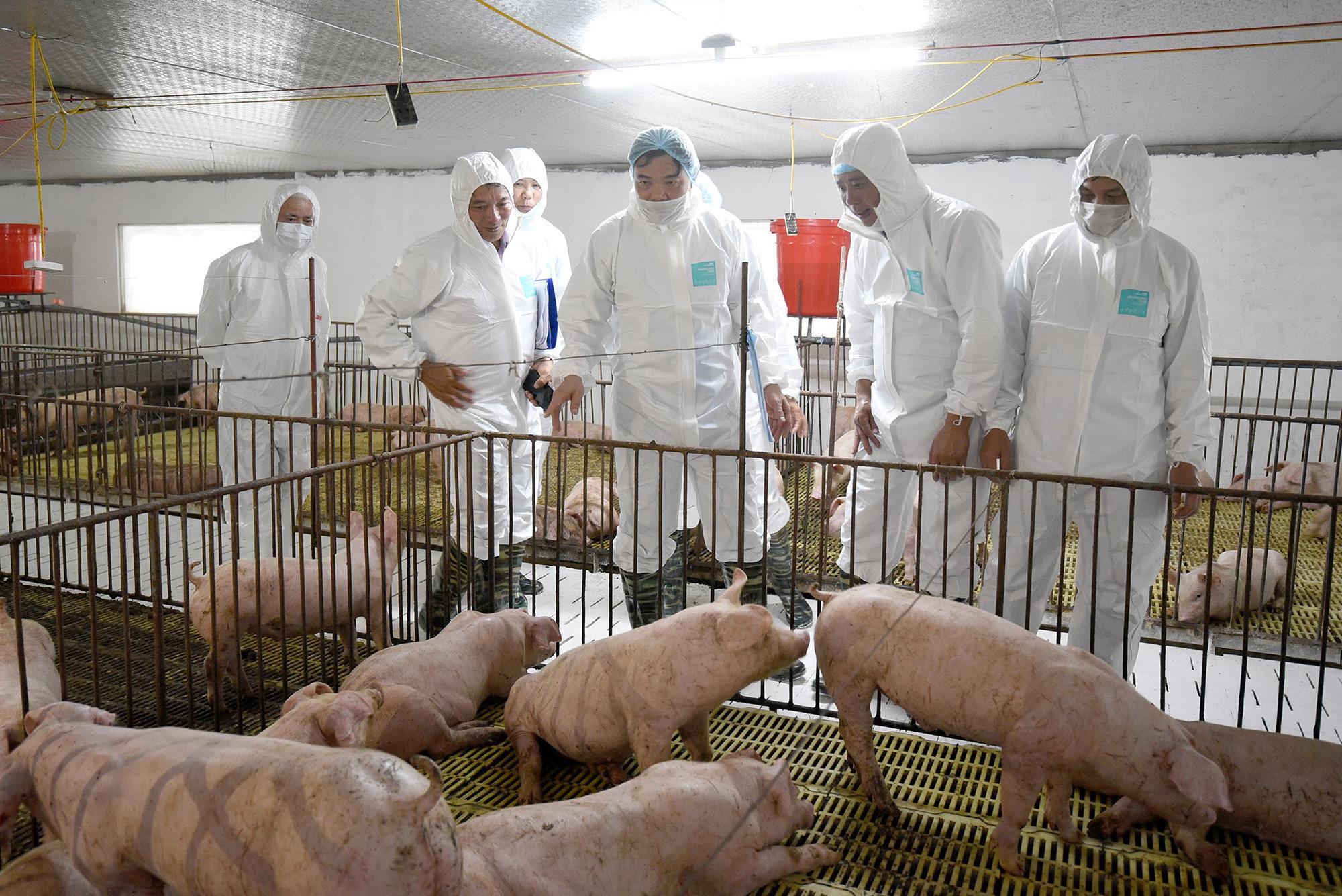 Trung Quốc nhập 1,72 triệu tấn thịt lợn, giá lợn hơi Việt Nam chưa thể giảm sâu - Ảnh 1.