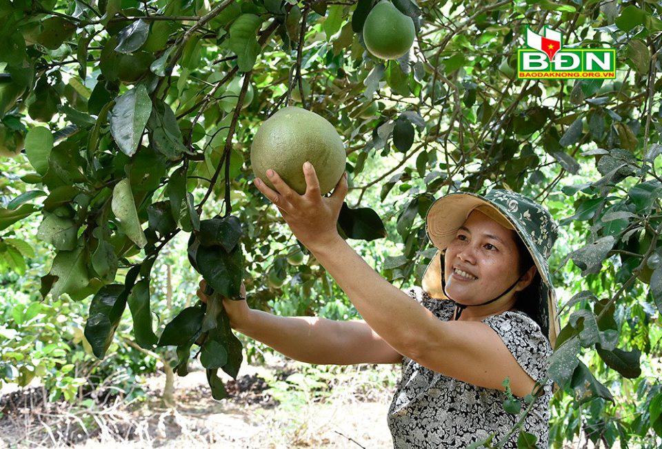 """Miệt vườn tiền tỷ """"gói"""" trong trang trại 12ha ở Đắk Nông, cây nào cũng ra trái quá trời - Ảnh 3."""