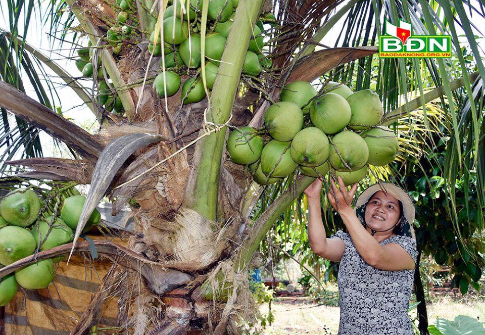 """Miệt vườn tiền tỷ """"gói"""" trong trang trại 12ha ở Đắk Nông, cây nào cũng ra trái quá trời - Ảnh 4."""