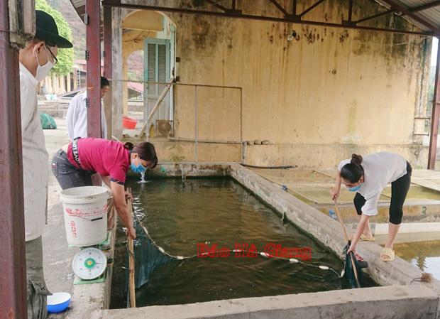 Hà Giang: Khám phá nơi thuần dưỡng các loài cá quý hiếm, có cả cá Anh vũ tiến vua - Ảnh 1.