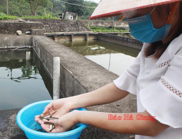 Hà Giang: Khám phá nơi thuần dưỡng các loài cá quý hiếm, có cả cá Anh vũ tiến vua - Ảnh 3.