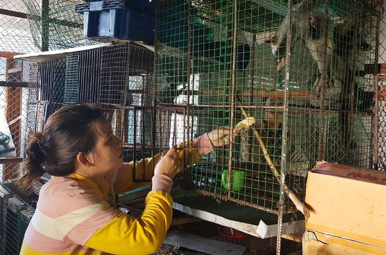 Phú Yên: Nuôi loài thú vốn là động vật quý hiếm, dân cứ bán 1 con thu 5 triệu đồng - Ảnh 1.