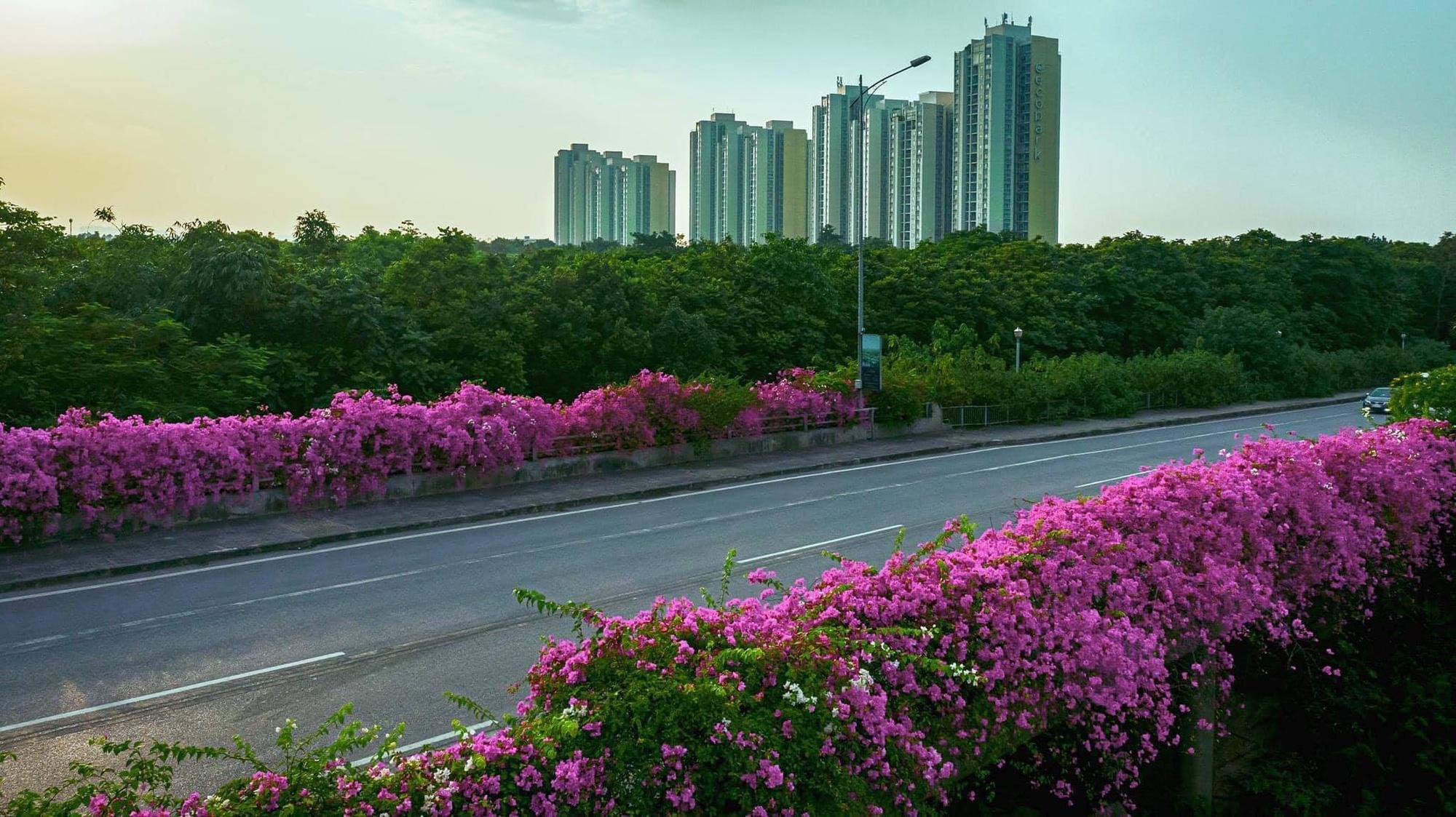 """Giới trẻ hào hứng """"check-in"""" con đường hoa giấy đẹp nhất Hà Nội - Ảnh 2."""