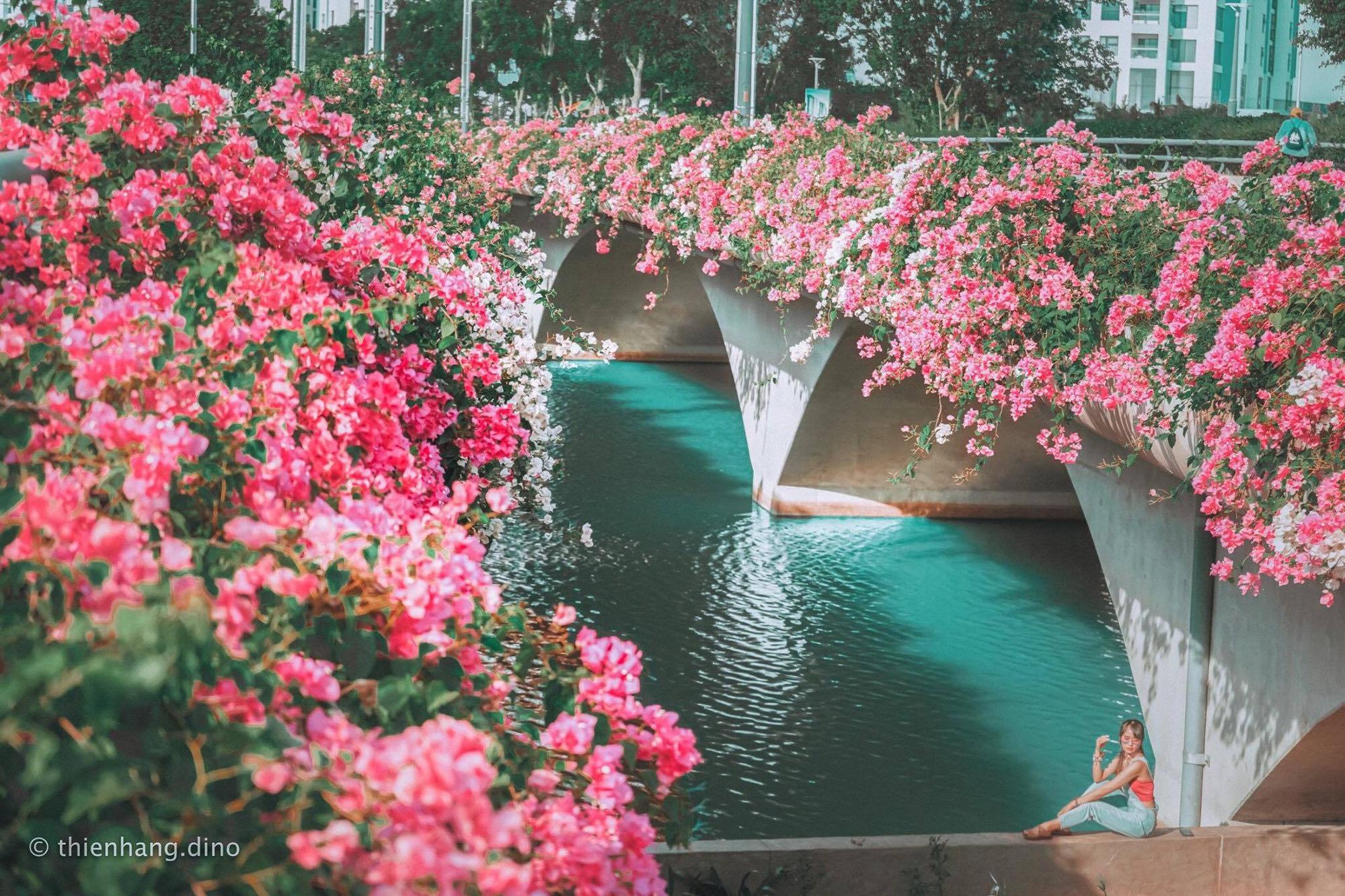 """Giới trẻ hào hứng """"check-in"""" con đường hoa giấy đẹp nhất Hà Nội - Ảnh 4."""