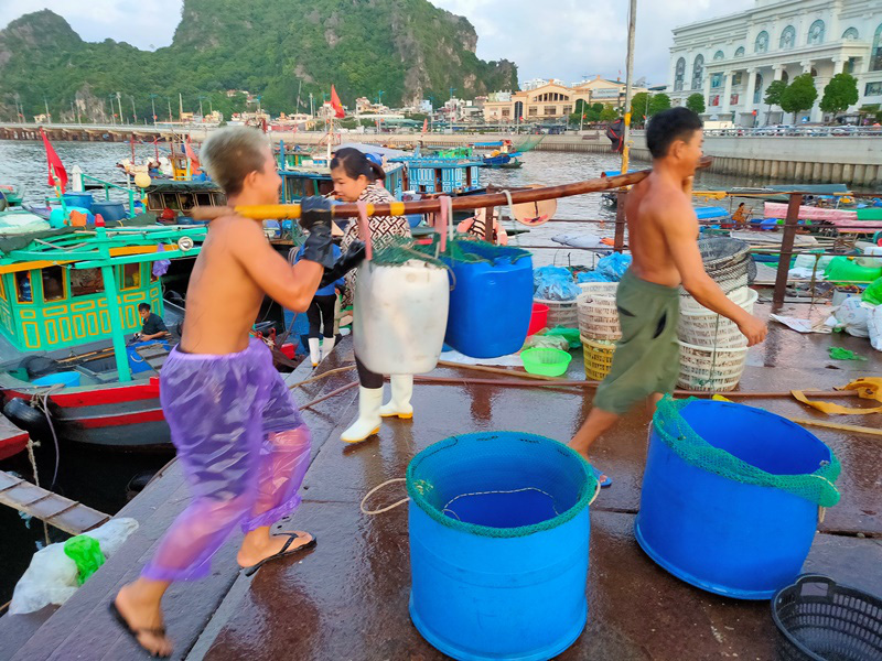 Đi săn hải sản tươi rói ở cảng cá Hạ Long lúc tinh mơ - Ảnh 10.