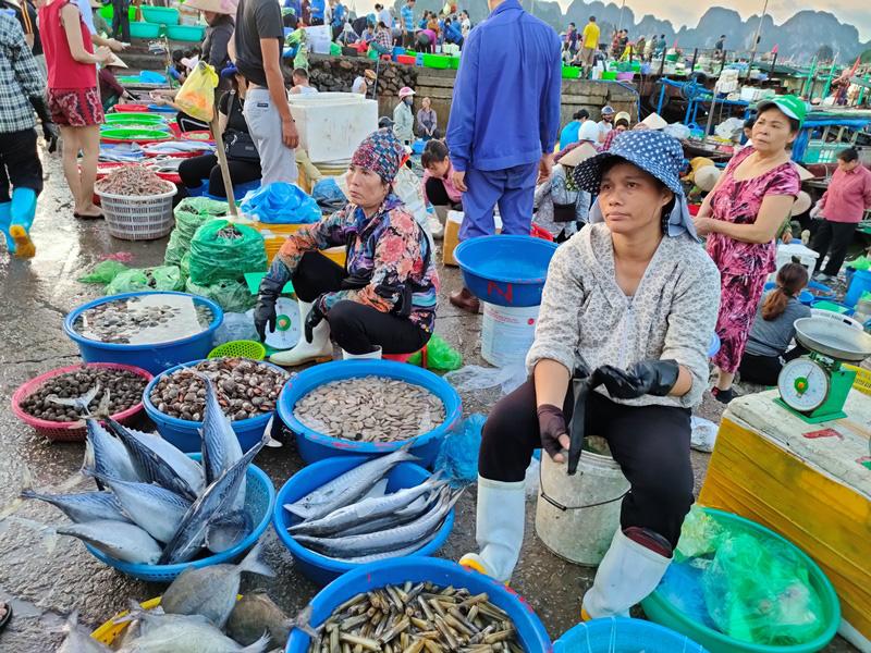 Đi săn hải sản tươi rói ở cảng cá Hạ Long lúc tinh mơ - Ảnh 9.