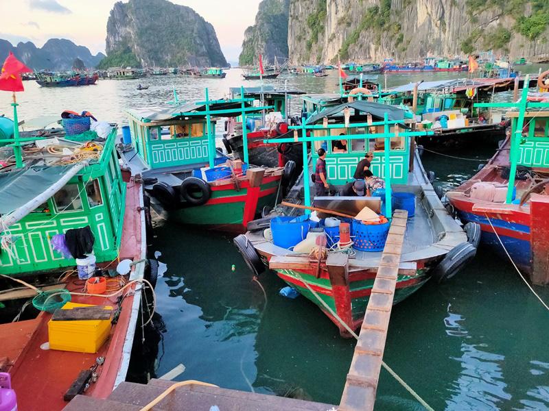 Đi săn hải sản tươi rói ở cảng cá Hạ Long lúc tinh mơ - Ảnh 13.