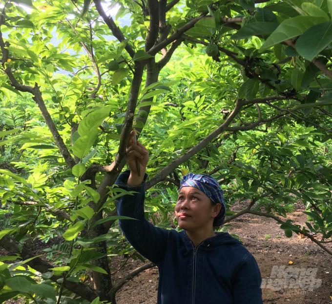 Làng nghề độc đáo trên xứ chè: Về xóm núi xem thụ phấn na - Ảnh 1.